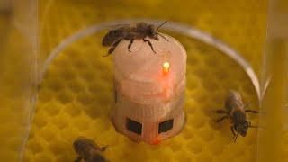 De-minuscules-robots-europeens-communiquent-avec-les-abeilles