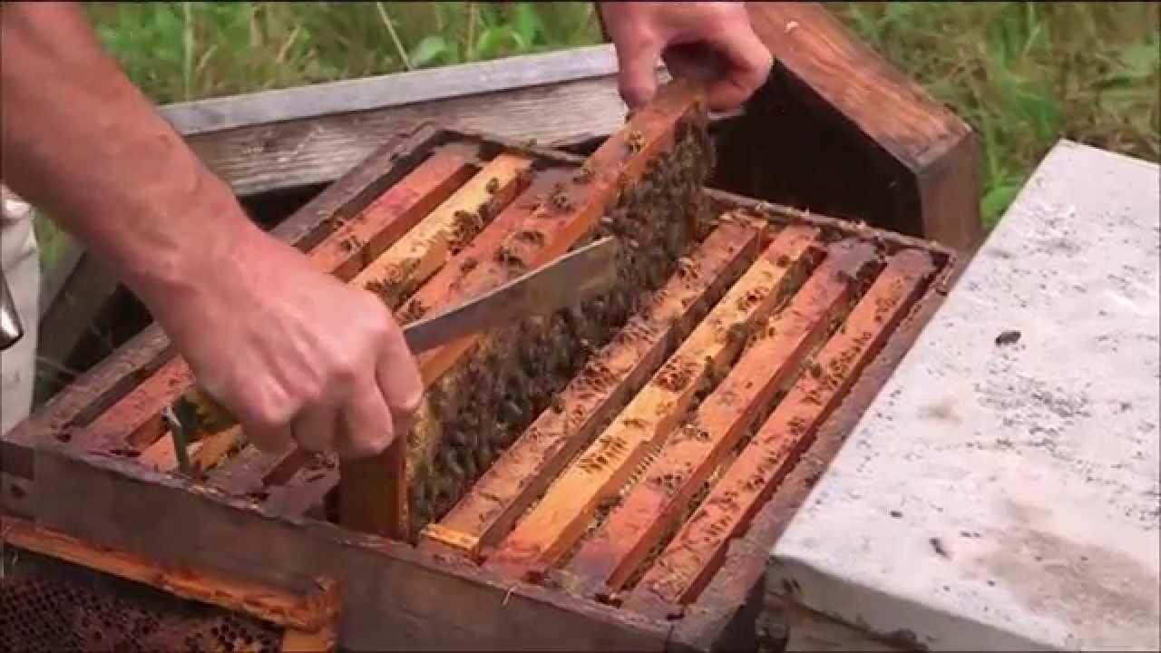 La-technologie-au-secours-des-abeilles-FUTURE-ARTE