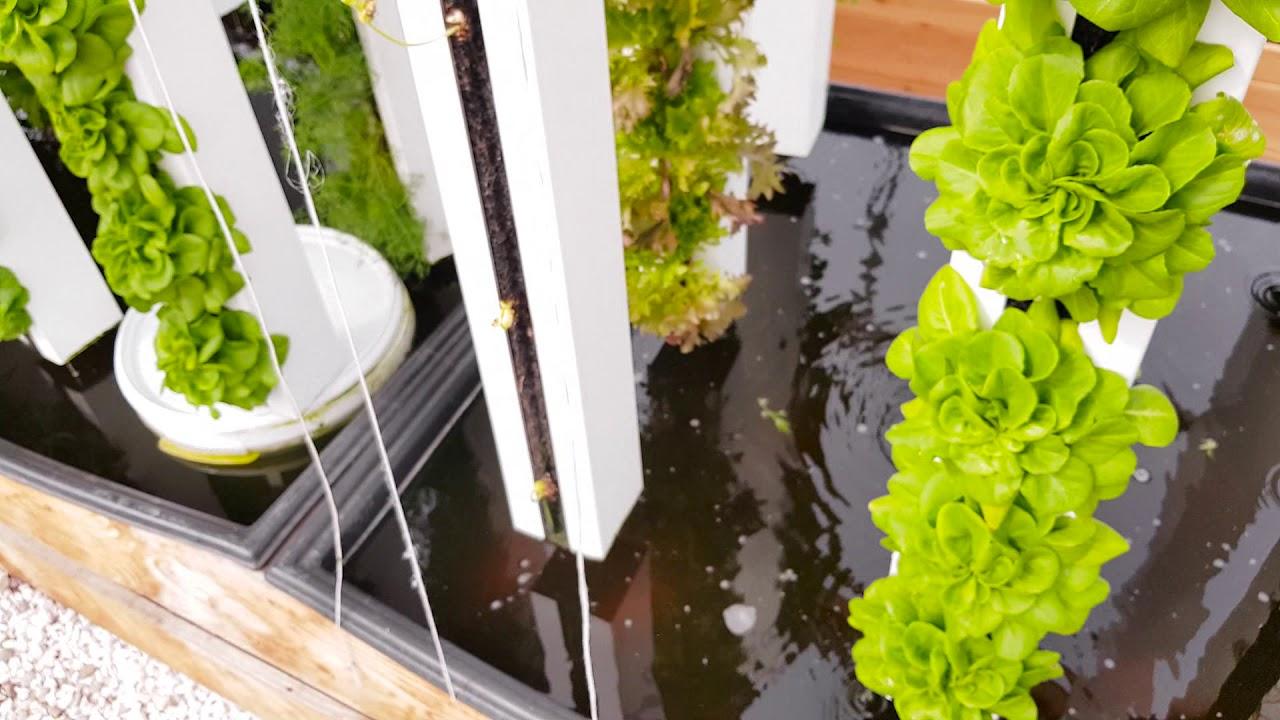 MYFOOD-Visite-de-la-serre-connectee-en-Alsace-debut-Avril-Cultiver-facilement-dans-votre-jardin