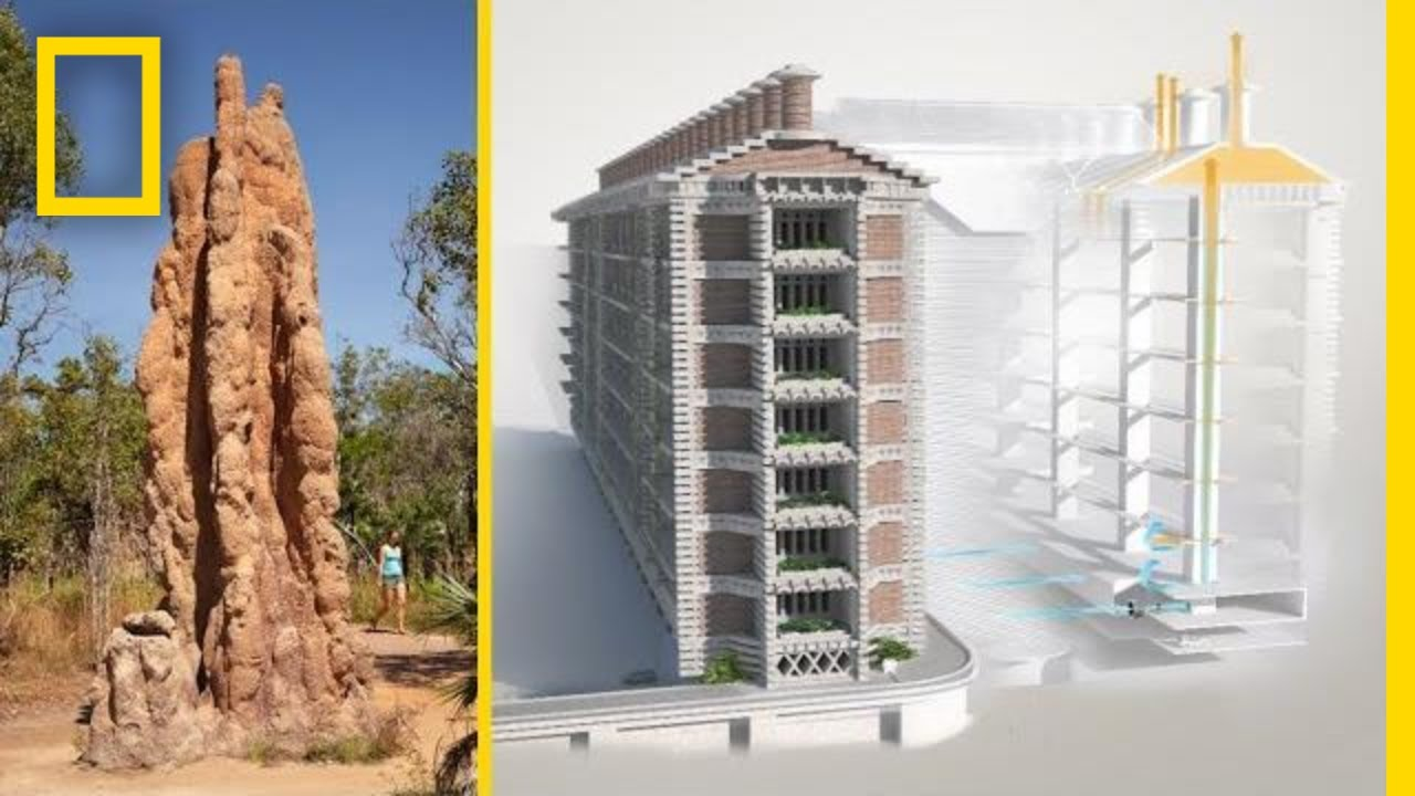 See-How-Termites-Inspired-a-Building-That-Can-Cool-Itself-National-Geographic