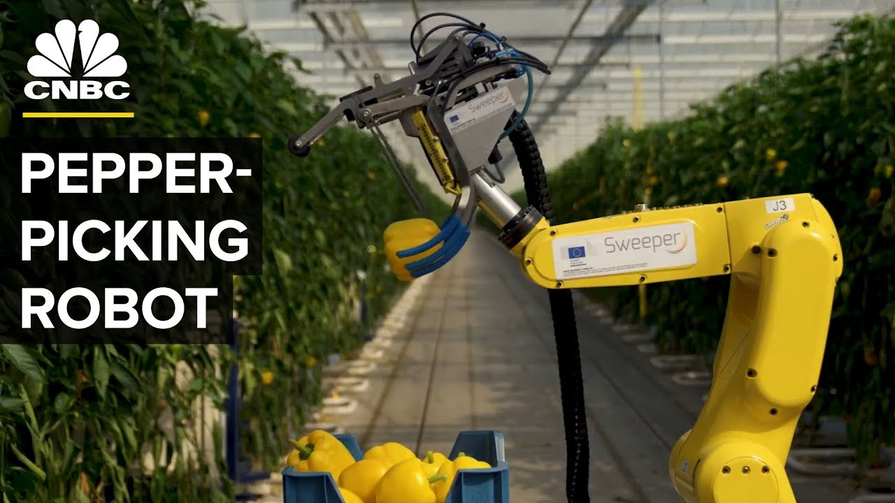 Watch-This-AI-Robot-Pick-Peppers-With-A-Tiny-Saw